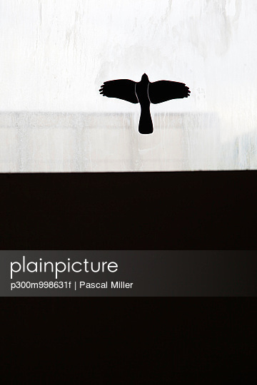 Germany, Berlin, peace dove, sticker on window - p300m998631f by Pascal Miller