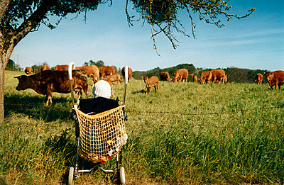 Kind im Kinderwagen beobachtet Kühe - p0060057 von Richard Bareis