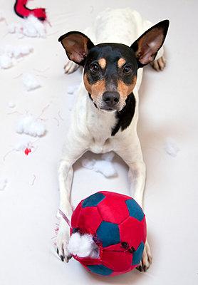 Playful dog - p580m1552863 by Eva Z. Genthe