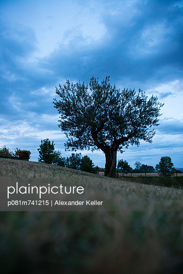 Baum in der Dämmerung - p081m741215 von Alexander Keller
