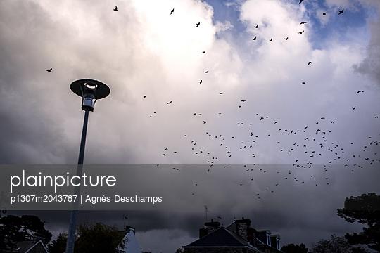 Birds flying at sunset - p1307m2043787 by Agnès Deschamps