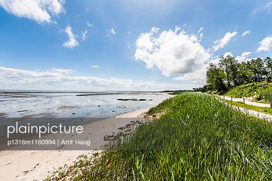 Strand am Wattenmeer, Keitum, Sylt, Schleswig-Holstein, Deutschland - p1316m1160994 von Arnt Haug