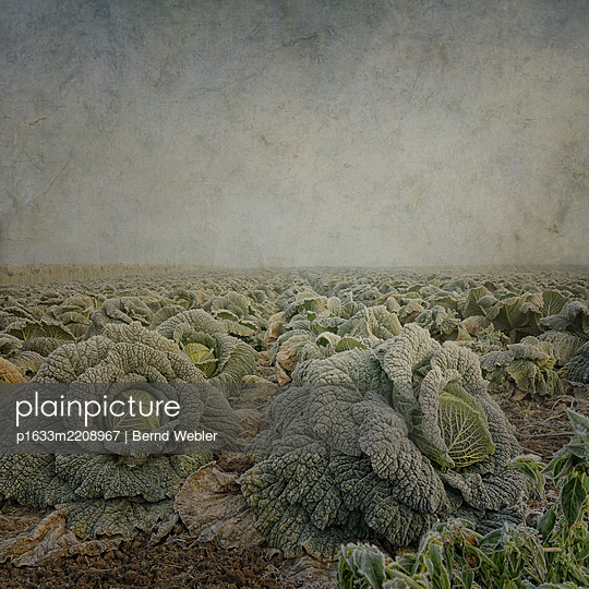 Cabbage Field - p1633m2208967 by Bernd Webler