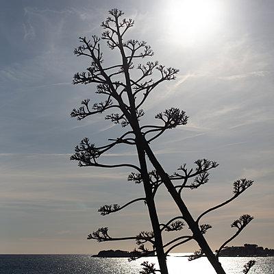 Wind swept trees on the coast - p1138m2283764 by Stéphanie Foäche