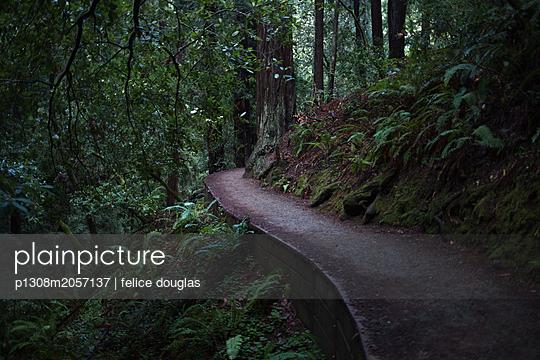 Waldweg - p1308m2057137 von felice douglas