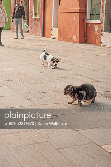 A terrier and a cat on the pavement, Venice - p1609m2219670 by Katrin Wolfmeier