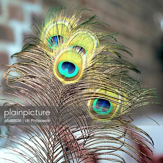 Pfauenfedern - p5450036 von Ulf Philipowski