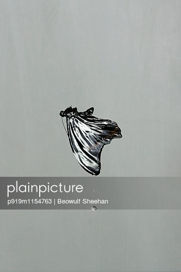 Fallender Falter - p919m1154763 von Beowulf Sheehan