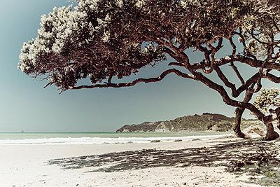 Baum spendet Schatten am Strand an der Tasmanischen See - p1255m1574984 von Kati Kalkamo