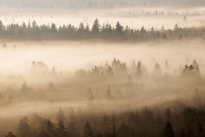 German, Bavaria, Munich, Isar Valley, Morning mist in forest - p300m2081179 by Martin Rügner