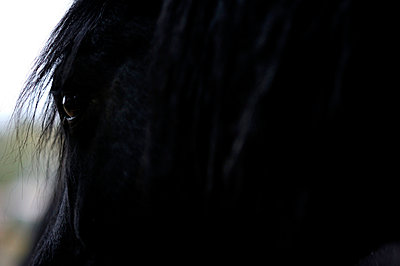 Pferd - p8290236 von Régis Domergue