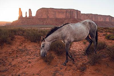 Wild Horse - p1507m2028545 by Emma Grann