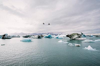 Die Gletscherlagune Jökulsarlon - p1600m2168267 von Ole Spata