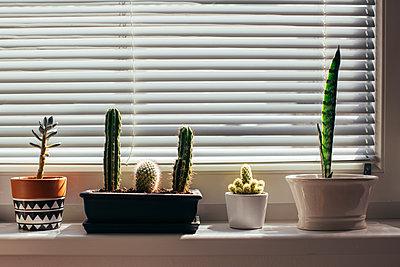 Little flower pots on windowsill - p300m1505195 by Mosuno Media