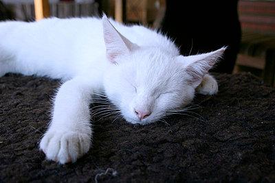 Sleeping kitten - p3040033 by R. Wolf