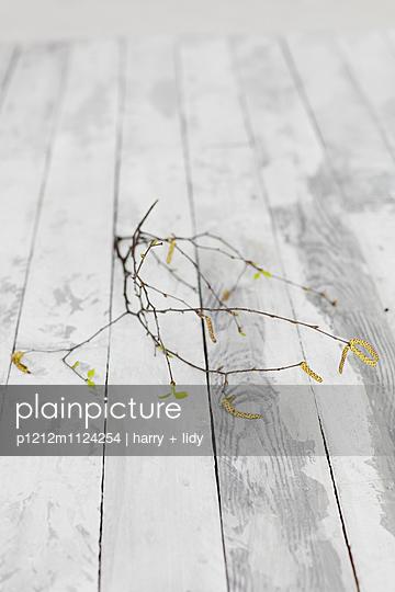 Birkenzweig auf Holzbretter - p1212m1124254 von harry + lidy