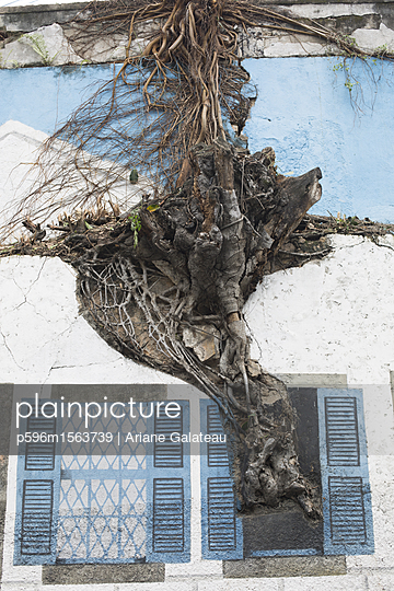 Baum an einer Fassade - p596m1563739 von Ariane Galateau
