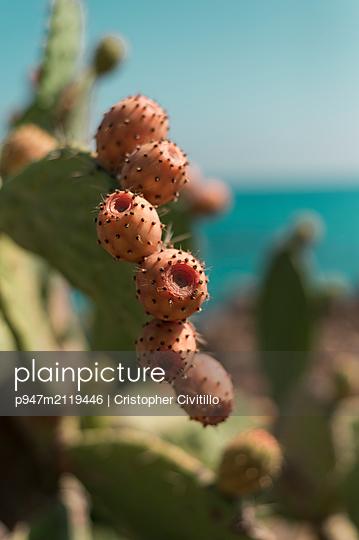 Prickly pears - p947m2119446 by Cristopher Civitillo