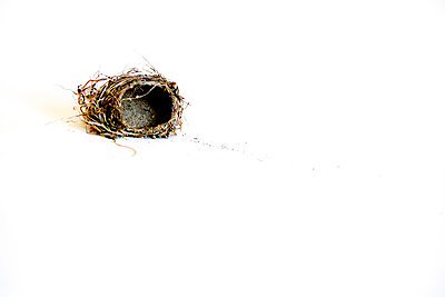 The Nest - p1086m865677 by Carrie Marie Burr