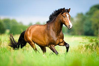 Galoppierendes Pony - p1273m1215249 von melanka