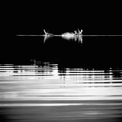 Whooper swans - p3227947 by Karoliina Norontaus