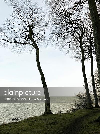 Trees on the Baltic Sea coast - p382m2100256 by Anna Matzen