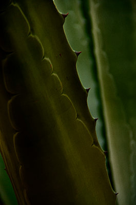 Close Up of a Cactus - p1331m1169210 by Margie Hurwich
