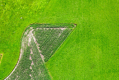 Aerial view of maize field in meadow - p300m1113510f by Klaus Leidorf