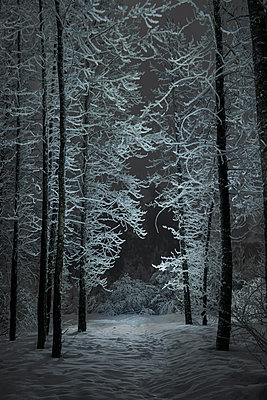 Scenic view of bare trees growing on snowy field in forest during night - p1166m1509527 by Cavan Images