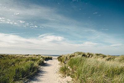 Germany, Spiekeroog, path through dunes - p300m1581579 von Dirk Wüstenhagen