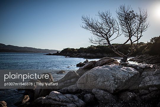 Stones and tree at seaside - p1007m1540378 by Tilby Vattard