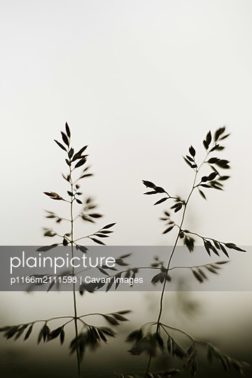 Dramatic spring plants close up - p1166m2111598 by Cavan Images