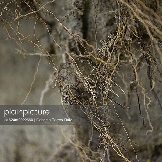 Fine roots - p1624m2222660 by Gabriela Torres Ruiz