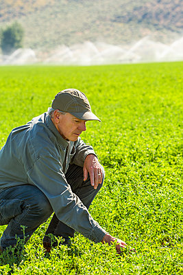 Crouching Caucasian farmer checking crop in field - p555m1303723 by Steve Smith