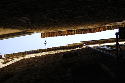 Frankreich, Vogel zwischen Hausfassaden - p260m2222603 von Frank Dan Hofacker