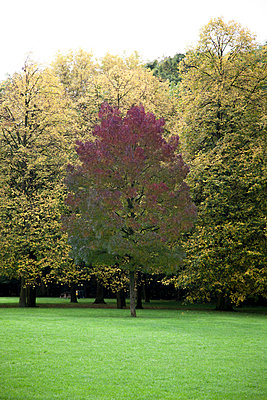 Trees in autumn - p445m729220 by Marie Docher