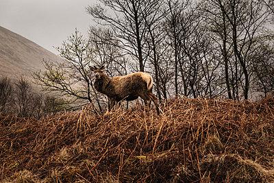 Deer - p1477m2038962 by rainandsalt