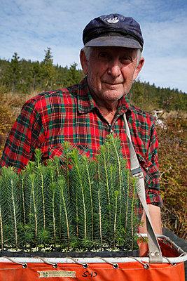 Waldbauer mit Nadelbaumsetzlingen - p235m945930 von KuS