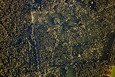 Aerial view, Forest - p913m2125491 by LPF