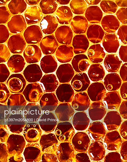 Honeycomb - p1397m2054800 by David Prince