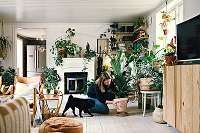 Full length of woman crouching by pug while positioning potted plant on plate in room at home - p426m2101879 by Maskot