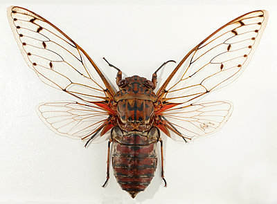 Moth - p959m1055694 by Appold