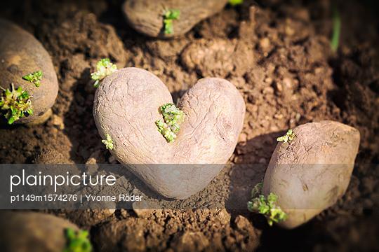 Heart shaped potato - p1149m1574276 by Yvonne Röder