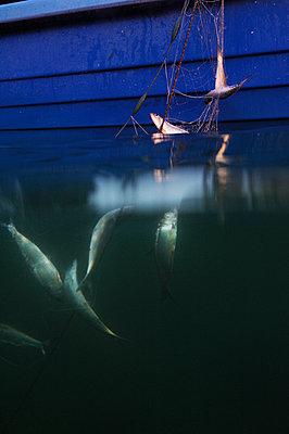 Fishery - p922m2071464 by Juliette Chretien