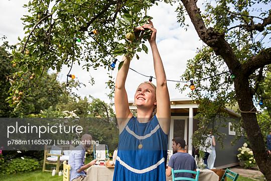 Frau pflückt einen Apfel vom Baum - p788m1165337 von Lisa Krechting