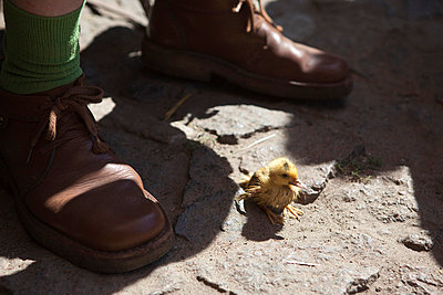A duckling near the feet of a man - p301m714228f by Halfdark