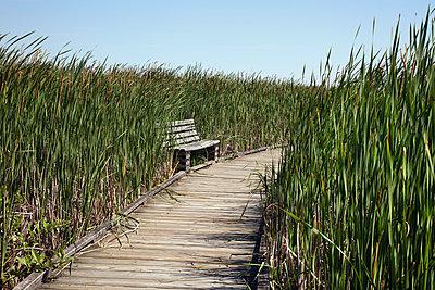 Boardwalk in marsh - p836m1463182 by Benjamin Rondel