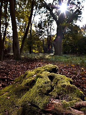 Forest - p9180096 by Dirk Fellenberg