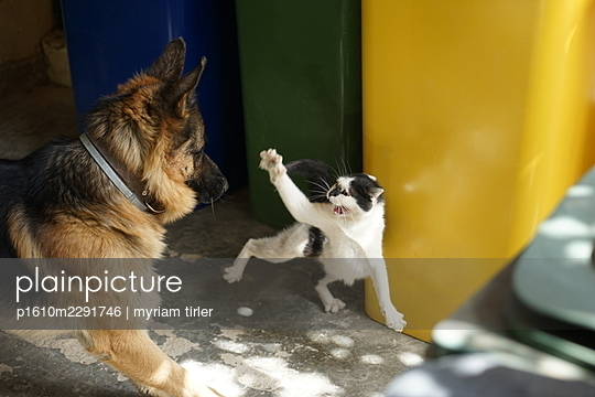 Dog and cat fight - p1610m2291746 by myriam tirler