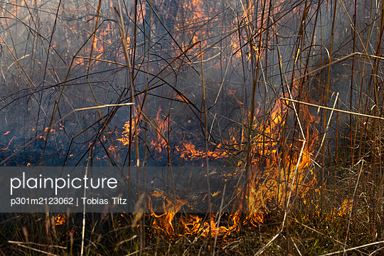 Preventative patch burning fire - p301m2123062 by Tobias Titz